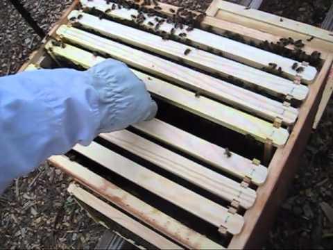 b236eee0915 Beekeeping  Plastic Or Wax Foundation