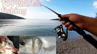 Top Water Fishing for Sea Bass I got many sea bass and a seagull Feat Surf Walker 125