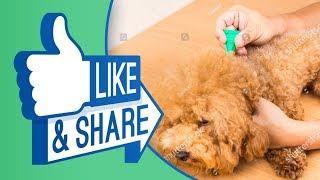 Biện pháp tiêu diệt và trị ve rận chó hiệu quả 100%