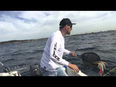 Squid Scene Australia - Chasing Big Calamari with Dave Austin.