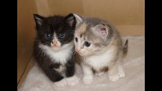 Котята (кошечки) в хорошие руки, СБб, Чёрная Речка