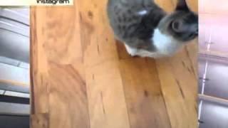 Двулапый котенок из США стал звездой Сети