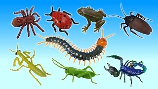 Animal Planet Giant Insect Adventure! Fun Bug Toys for Kids!