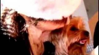 グラビアアイドル吉田由莉の愛犬と日記 yoshida yuri 吉田由莉 動画 7