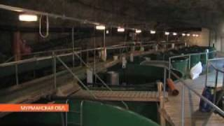 В Мурманске решали судьбу аквакультуры