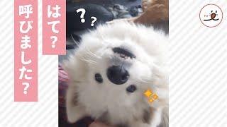 via Instagram@natsuki_the_samoyed https://www.instagram.com/natsuki...
