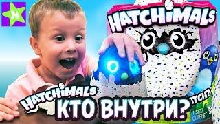 Hatchimals - Хетчималс - интерактивный питомец, вылупляющийся из яйца - Полный обзор- хэтчималс