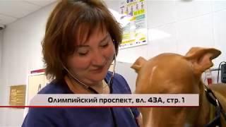 (12+) Вакцинация домашних животных