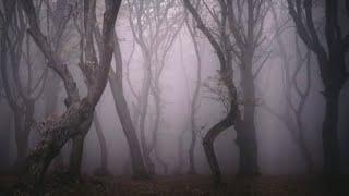 9 μυστήρια που αφορούν δάση.