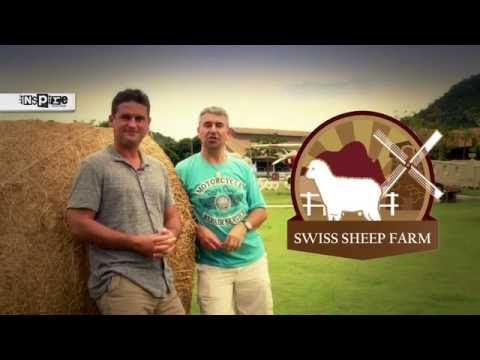 Swiss Sheep Farm in Pattaya, Thailand | What's On Show By inspire