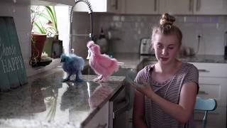 How to color chickens with food coloring