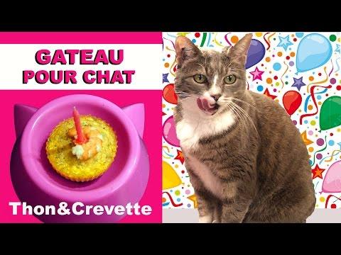 Gâteau Pour Chat Au Thon Et Crevette ♡ Virginie Fait Sa Cuisine [44]