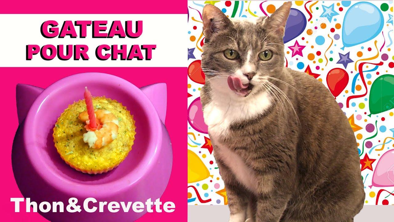 G teau pour chat au thon et crevette virginie fait sa cuisine 44 youtube - Virgine fait sa cuisine ...