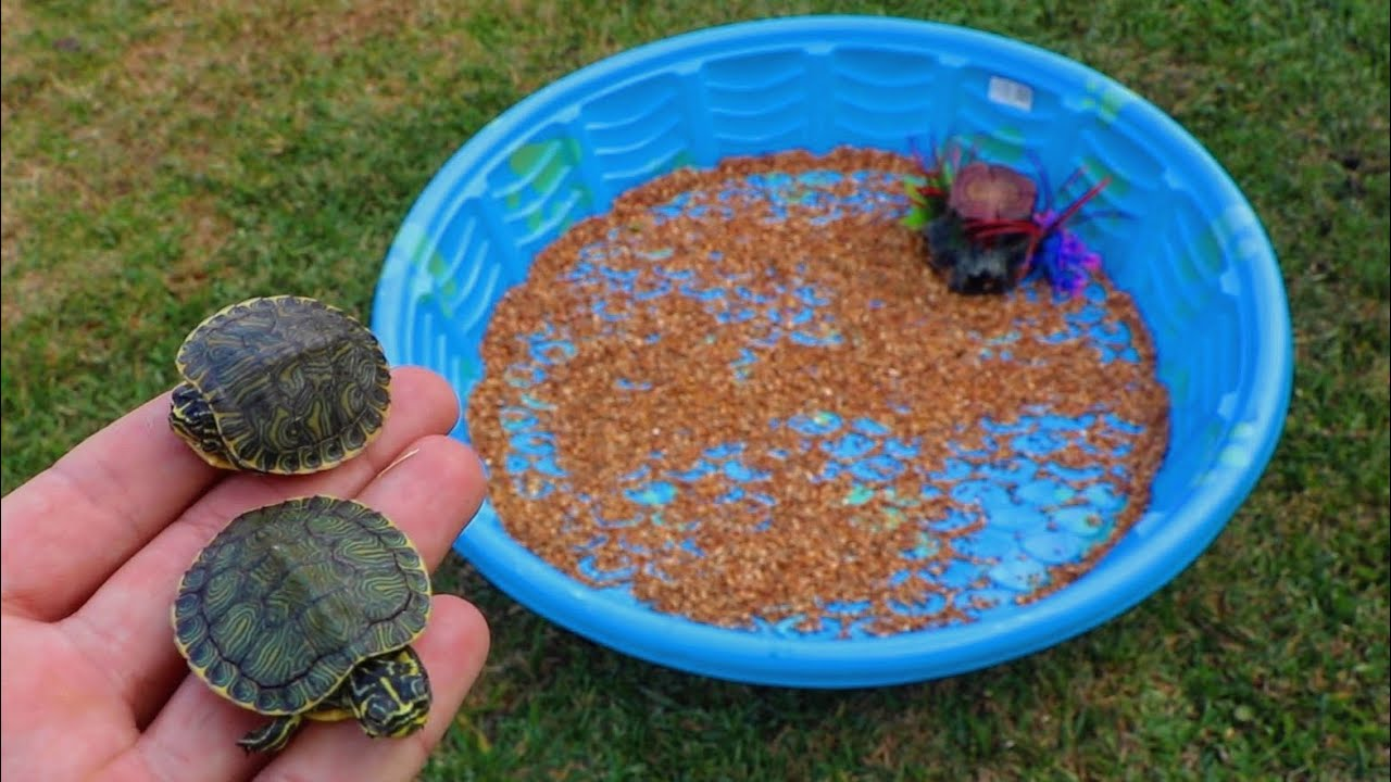 Rescued Baby Turtles Get Their Dream Home Youtube