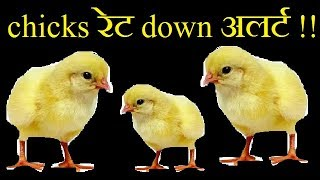 chicks रेट में आया गिरावट | chicks rate goes down today in diffrent states