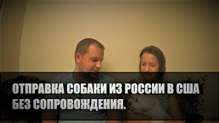 77# Как отправить собаку из России в США без сопровождения. Карго.(, 2017-07-20T00:24:07.000Z)