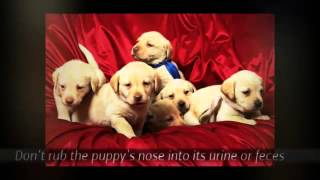Puppy House Training Tips | Tips on Puppy Training  | Puppy Training Tips For the First Week | Crate