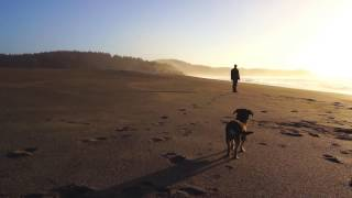 """Six Organs of Admittance """"Adoration Song"""" (Official Music Video)"""