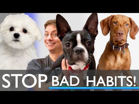 Puppy Training Session: Stop Running Away and Stopping Other Unwanted Habits