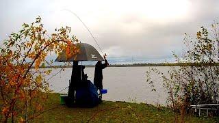 Отличная фидерная рыбалка осенью 2020 на озере