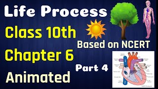 Life Process Class 10 Science Biology | Animated Video | Science Class 10 Chapter 6 | Part 4