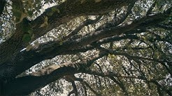 Castelnau : des riverains mobilisés pour sauver un arbre centenaire menacé par un projet immobilier