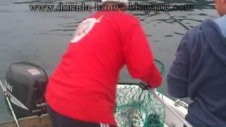 pescadoradatanero FER Y TANERO fishing orata peche dorade pesca dorada .wmv