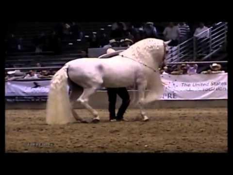 El Corrido Del Caballo Blanco