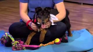 Pets on Parade - 2/27/16 - Adoptable pets (part 4)