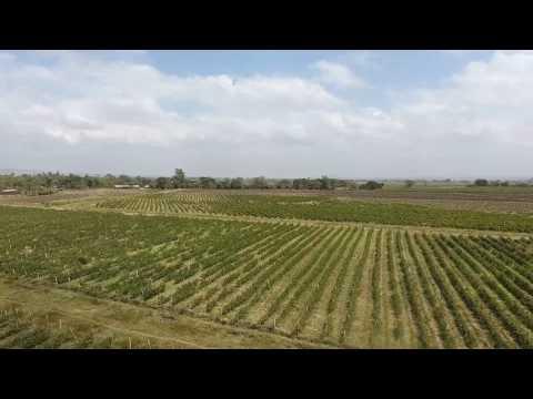 Awash Wine SC Farm