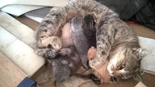 Cute Little Baby Kittens