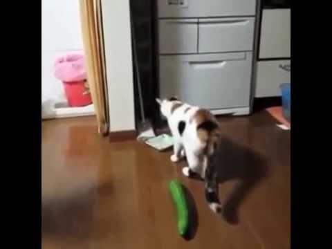 Cat Freak Out Gif Cucumber
