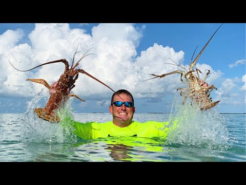 How to {CATCH CLEAN COOK} Lobsters, in totally New Area – Florida Keys
