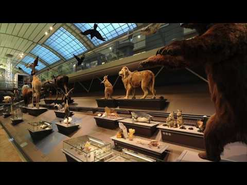 Interesting Jobs In Museums : MUSEOLOGY  : After 12 + ... ?