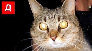 Пропала Кошка Ищем Кошку в Темноте с Фонариком Чем Всё Закончилось 잃어버린 고양이