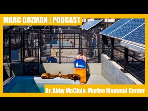 Ep 039 | Caring for California's Marine Mammals