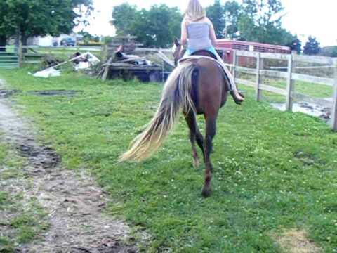 Ashley riding Coco 1999 POA pony mare