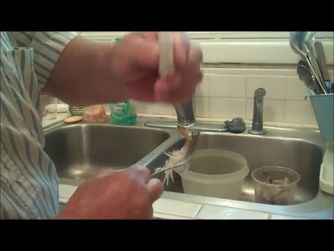 How To Devein Shrimp Using One-Stroke Of The Fork. No Knife Needed.