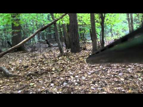 Arkansas Squirrel Hunt 2010