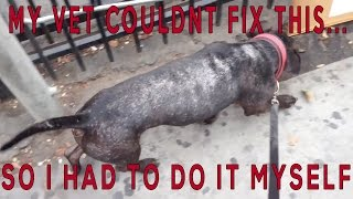HOW A RAW FOOD DOG DIET FIXED WHAT VET MEDS DIDN'T