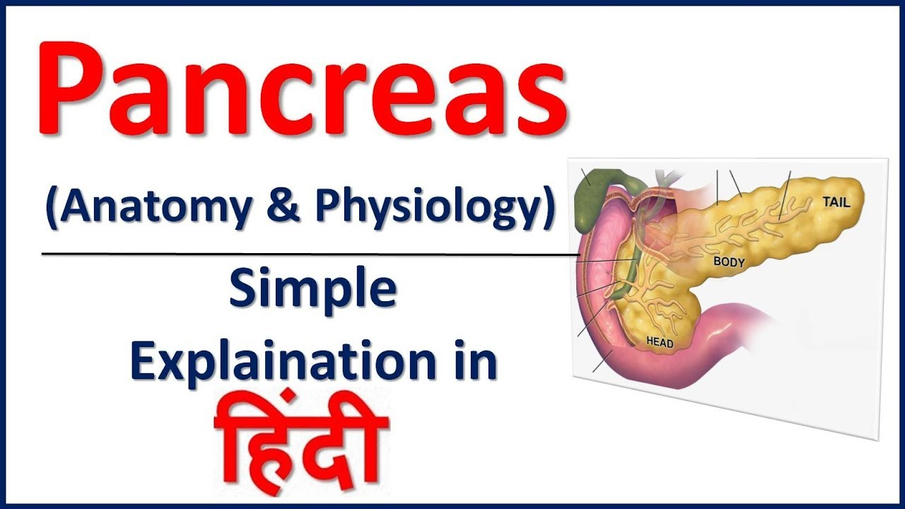 Anatomy and Physiology of Panreas SImple Explaination in Hindi ...