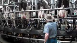 farm tour of Triple G Dairy  by Pheonix,Az by Iowa Farm Bureau members