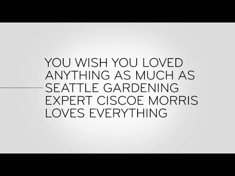 John Oliver   And Now This: Seattle Gardening Expert Ciscoe Morris