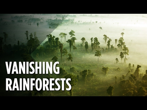 What Will The World Look Like When The Rainforests Disappear