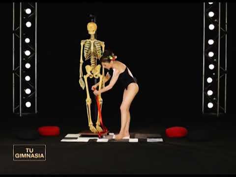 Anatomía y biomecánica del músculo cuádriceps - YouTube