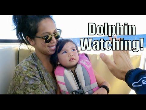 DOLPHIN WATCHING!!! - October 16, 2015 -  ItsJudysLife Vlogs