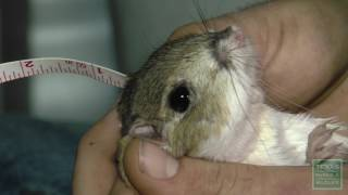Texas Kangaroo Rats, Hop For the Future