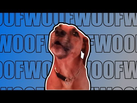 """Dog Sings """"If You're Stupid and You Know It"""" (TRANSCRIBED)"""