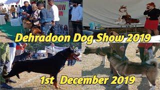 Dehradoon Dog Show 2019 !! DOON VELY KENNEL CLUB !! DOG SHOW !!