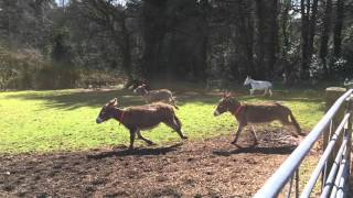 Donkeys enjoying themselves at Woods Farm
